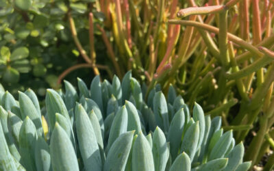 Things you should do for your succulents to thrive