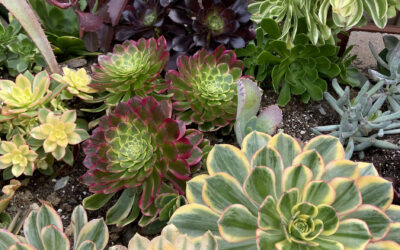 Caring for Propagated Leaves and Cuttings